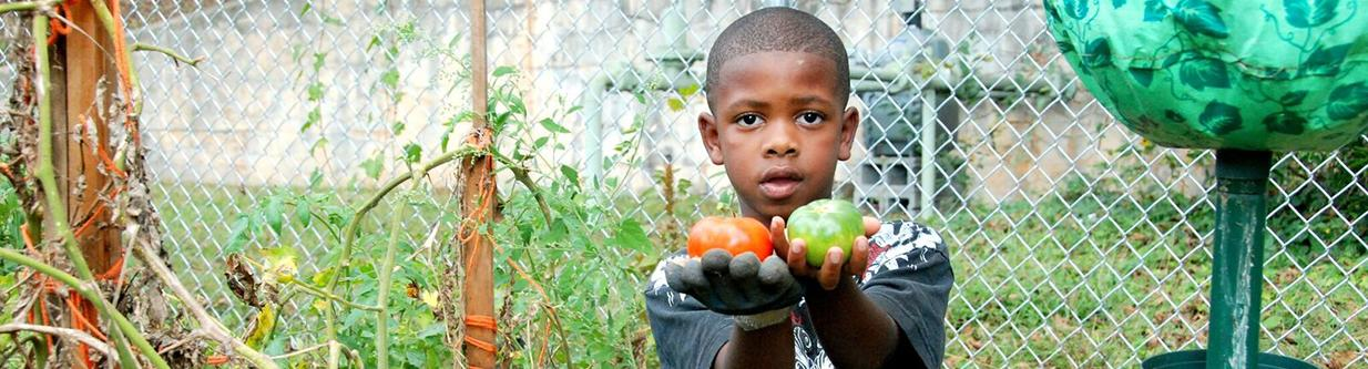 Boy in garden with tomatoes